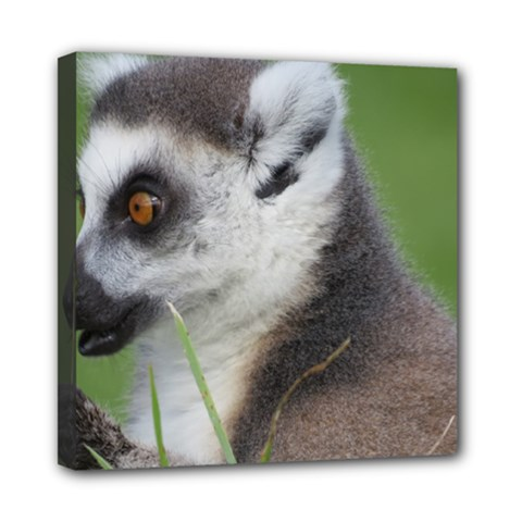 Ring Tailed Lemur  2 Mini Canvas 8  x 8  (Framed)