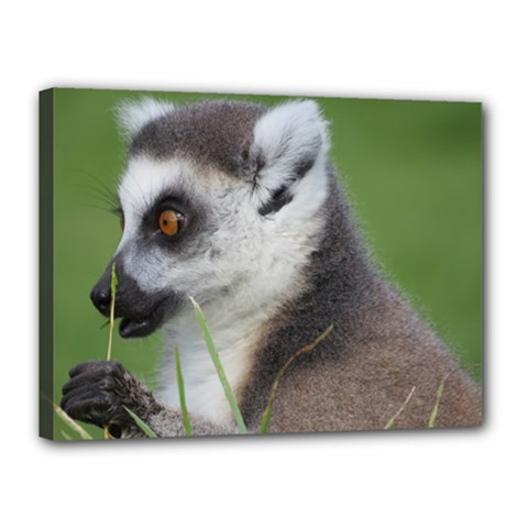 Ring Tailed Lemur  2 Canvas 16  X 12  (framed)