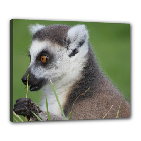 Ring Tailed Lemur  2 Canvas 20  x 16  (Framed)