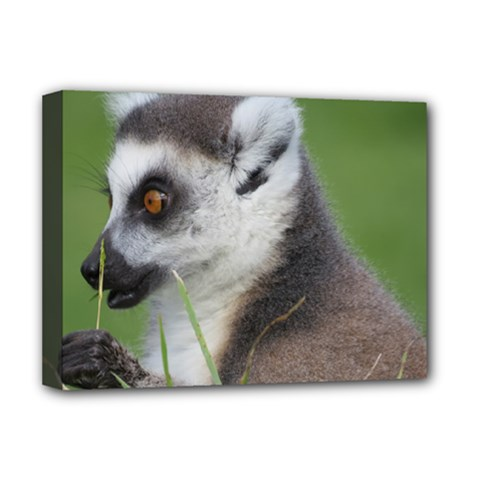 Ring Tailed Lemur  2 Deluxe Canvas 16  X 12  (framed)