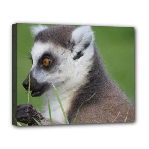 Ring Tailed Lemur  2 Deluxe Canvas 20  x 16  (Framed)