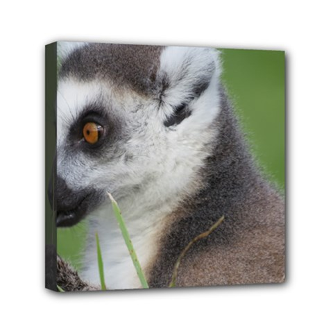 Ring Tailed Lemur  2 Mini Canvas 6  X 6  (framed)