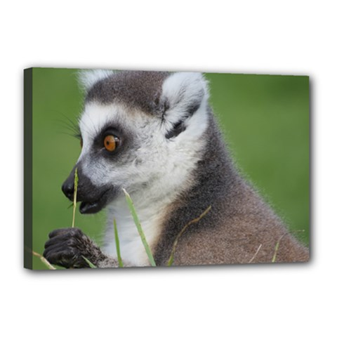 Ring Tailed Lemur  2 Canvas 18  x 12  (Framed)