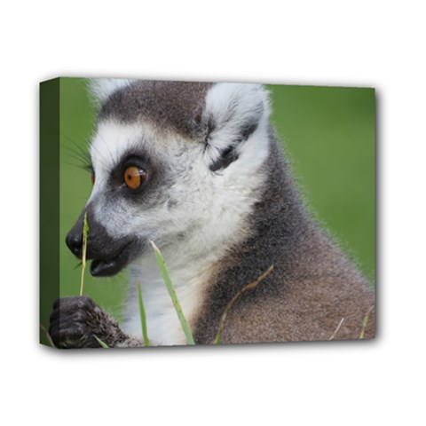 Ring Tailed Lemur  2 Deluxe Canvas 14  x 11  (Framed)