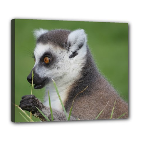 Ring Tailed Lemur  2 Deluxe Canvas 24  X 20  (framed)