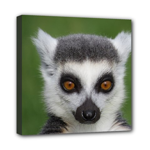 Ring Tailed Lemur Mini Canvas 8  x 8  (Framed)