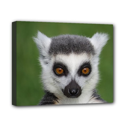 Ring Tailed Lemur Canvas 10  x 8  (Framed)