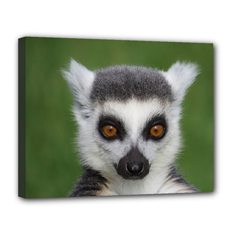 Ring Tailed Lemur Canvas 14  x 11  (Framed)