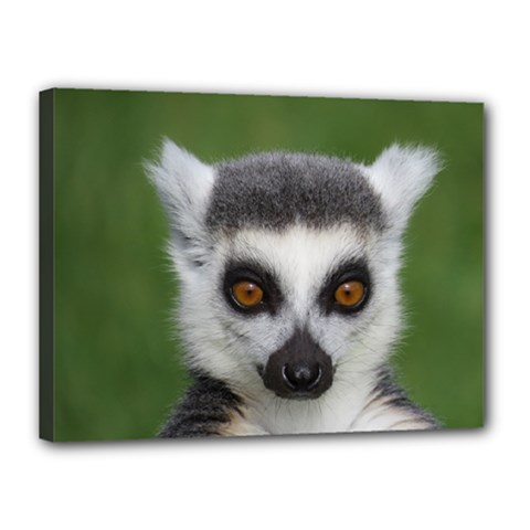 Ring Tailed Lemur Canvas 16  x 12  (Framed)