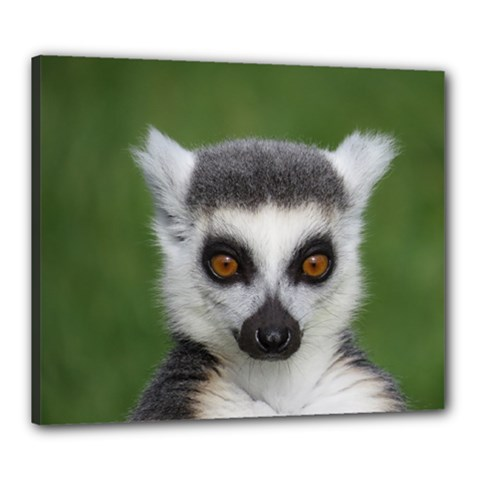 Ring Tailed Lemur Canvas 24  X 20  (framed)