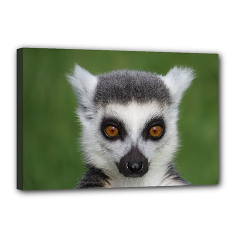 Ring Tailed Lemur Canvas 18  x 12  (Framed)