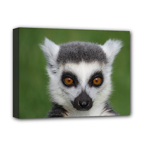 Ring Tailed Lemur Deluxe Canvas 16  x 12  (Framed)