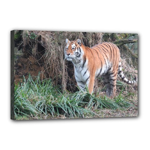 Tiger Canvas 18  X 12  (framed)