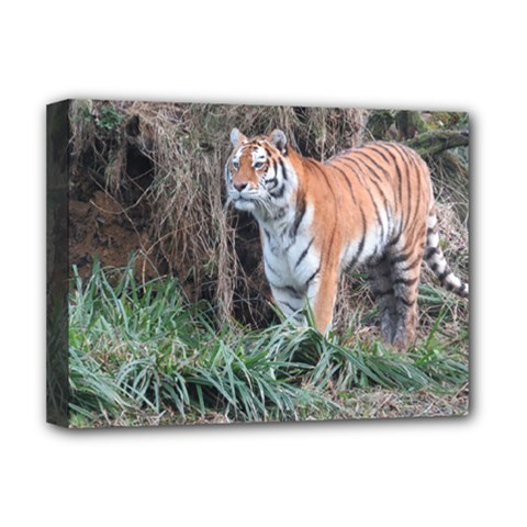 Tiger Deluxe Canvas 16  X 12  (framed)