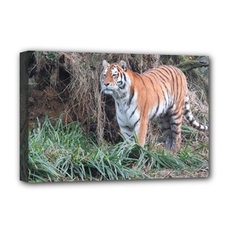 Tiger Deluxe Canvas 18  x 12  (Framed)