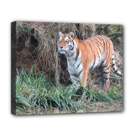 Tiger Deluxe Canvas 20  x 16  (Framed)