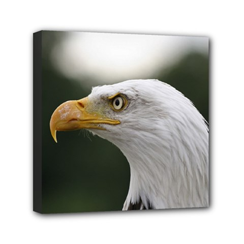 Bald Eagle (1) Mini Canvas 6  X 6  (framed)
