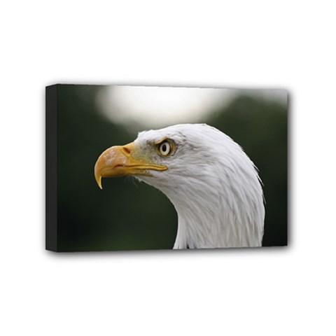 Bald Eagle (1) Mini Canvas 6  x 4  (Framed)