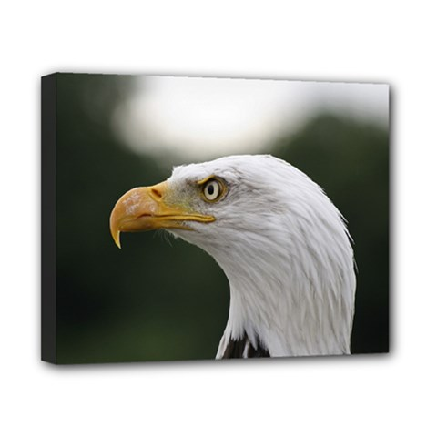 Bald Eagle (1) Canvas 10  X 8  (framed)