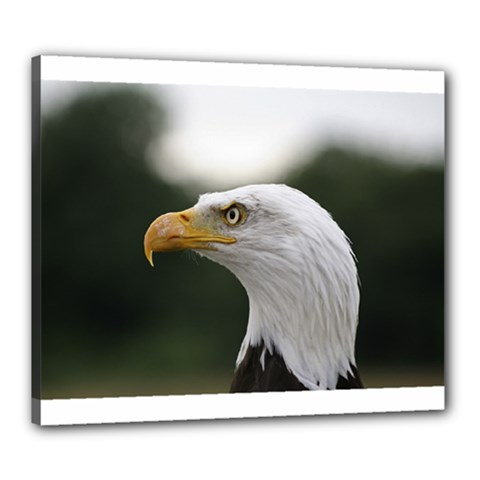 Bald Eagle (1) Canvas 24  x 20  (Framed)