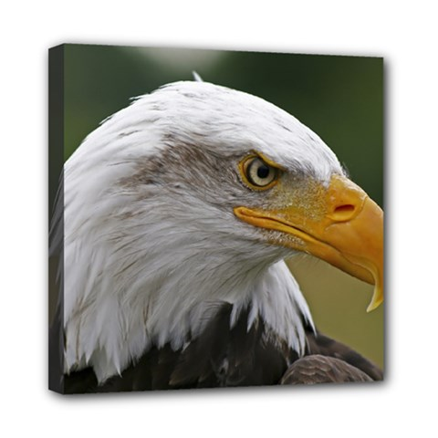 Bald Eagle (2) Mini Canvas 8  X 8  (framed)