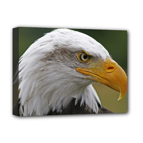 Bald Eagle (2) Deluxe Canvas 16  x 12  (Framed)