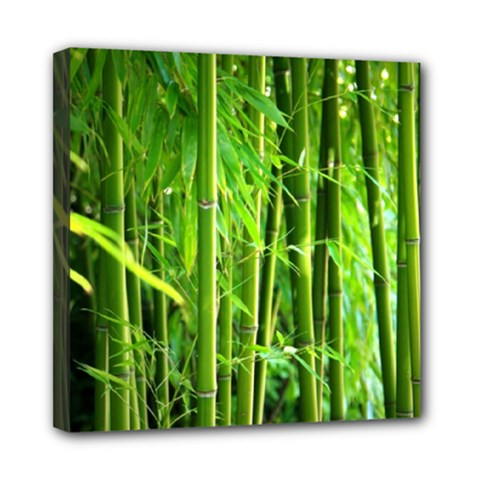 Bamboo Mini Canvas 8  x 8  (Framed)