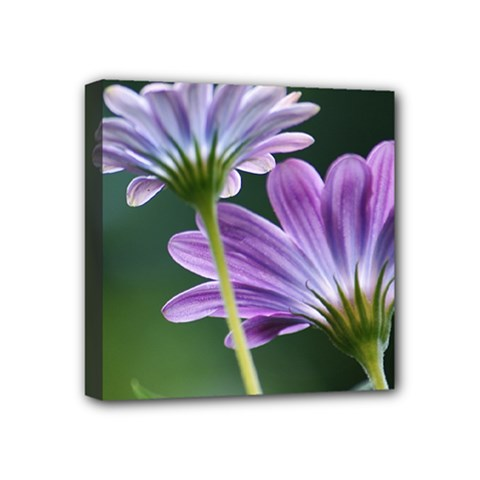Flower Mini Canvas 4  x 4  (Framed)