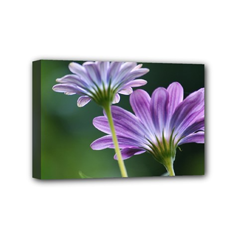 Flower Mini Canvas 6  x 4  (Framed)