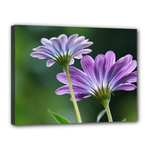 Flower Canvas 16  x 12  (Framed)