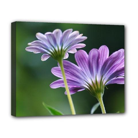 Flower Deluxe Canvas 20  x 16  (Framed)