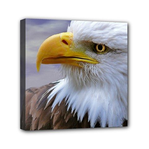 Bald Eagle Mini Canvas 6  x 6  (Framed)