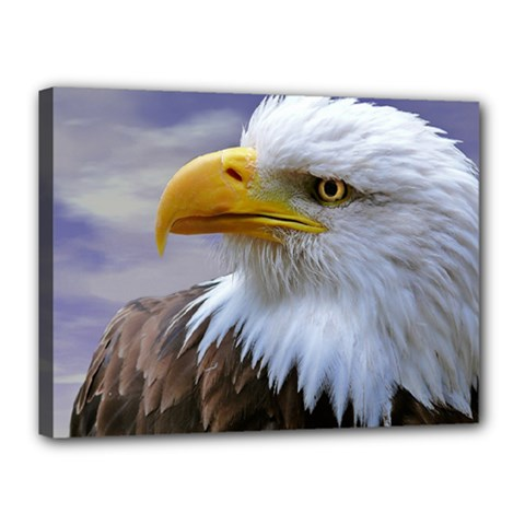 Bald Eagle Canvas 16  x 12  (Framed)