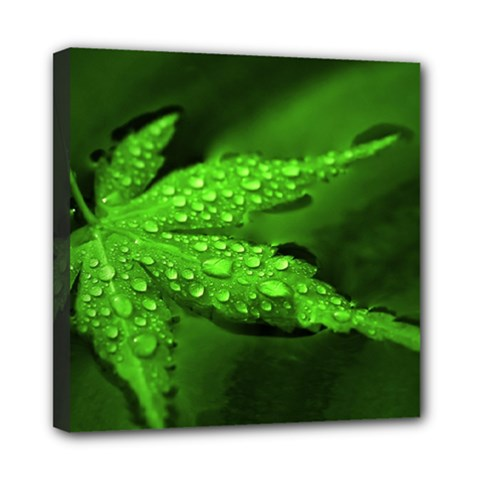 Leaf With Drops Mini Canvas 8  x 8  (Framed)