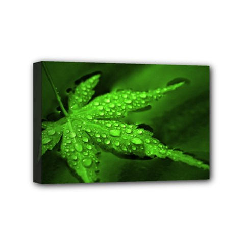 Leaf With Drops Mini Canvas 6  X 4  (framed)