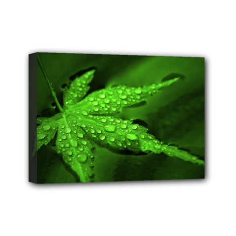 Leaf With Drops Mini Canvas 7  x 5  (Framed)