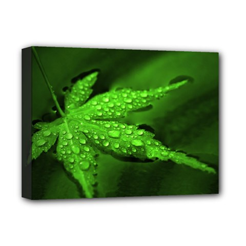 Leaf With Drops Deluxe Canvas 16  x 12  (Framed)