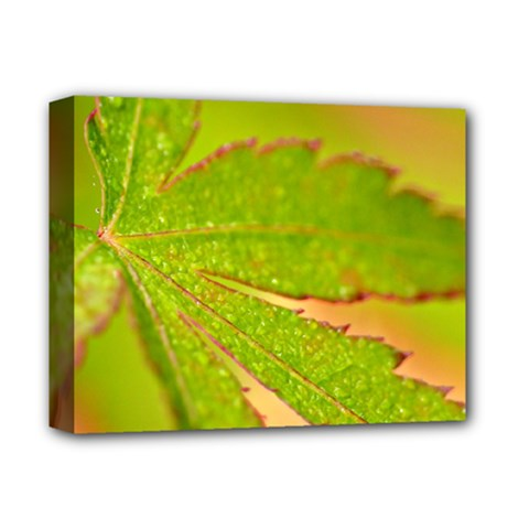Leaf Deluxe Canvas 14  x 11  (Framed)