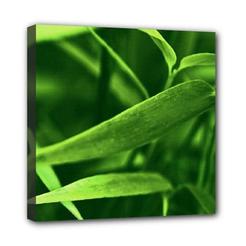 Bamboo Mini Canvas 8  x 8  (Framed)