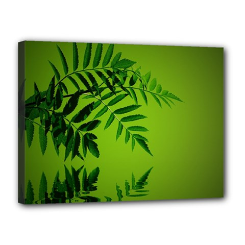 Leaf Canvas 16  x 12  (Framed)