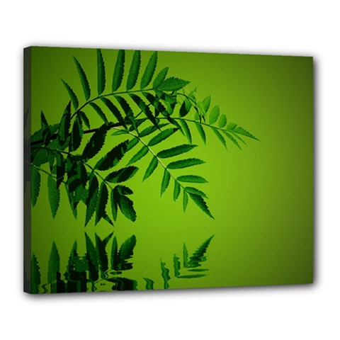 Leaf Canvas 20  x 16  (Framed)