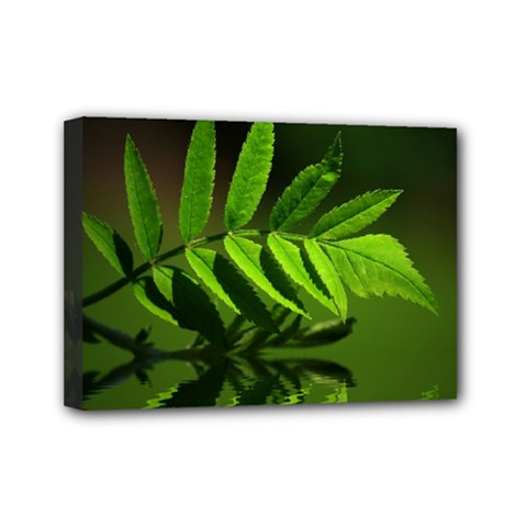 Leaf Mini Canvas 7  x 5  (Framed)