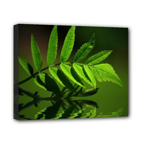 Leaf Canvas 10  X 8  (framed)