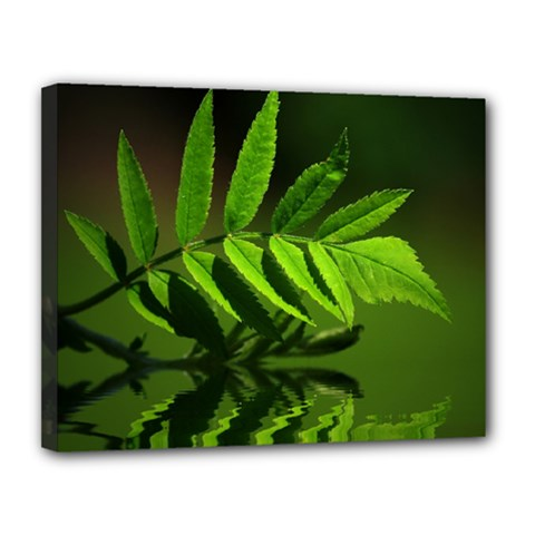 Leaf Canvas 14  x 11  (Framed)
