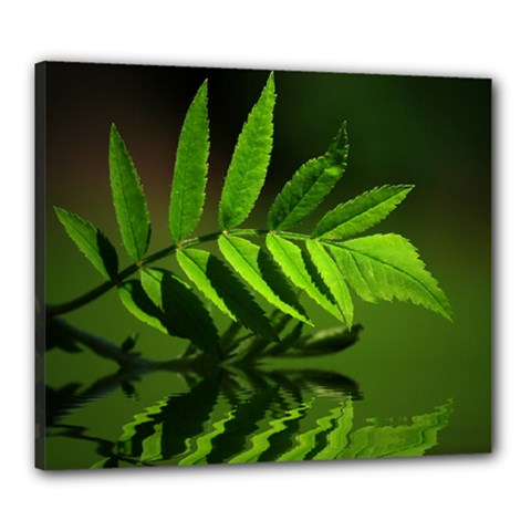 Leaf Canvas 24  x 20  (Framed)
