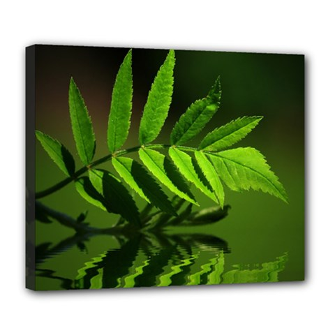 Leaf Deluxe Canvas 24  x 20  (Framed)