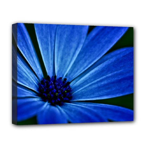 Flower Deluxe Canvas 20  x 16  (Framed)