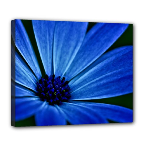 Flower Deluxe Canvas 24  X 20  (framed)
