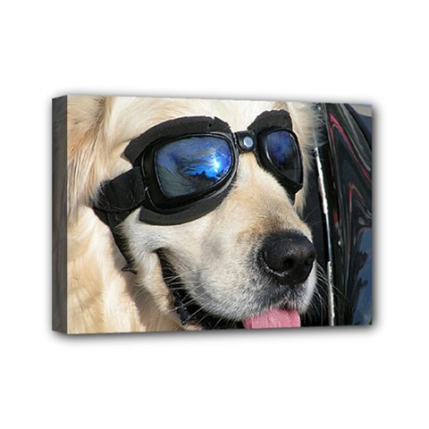 Cool Dog  Mini Canvas 7  x 5  (Framed)