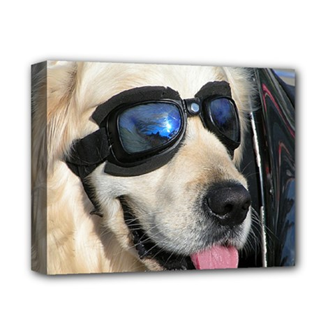 Cool Dog  Deluxe Canvas 14  x 11  (Framed)